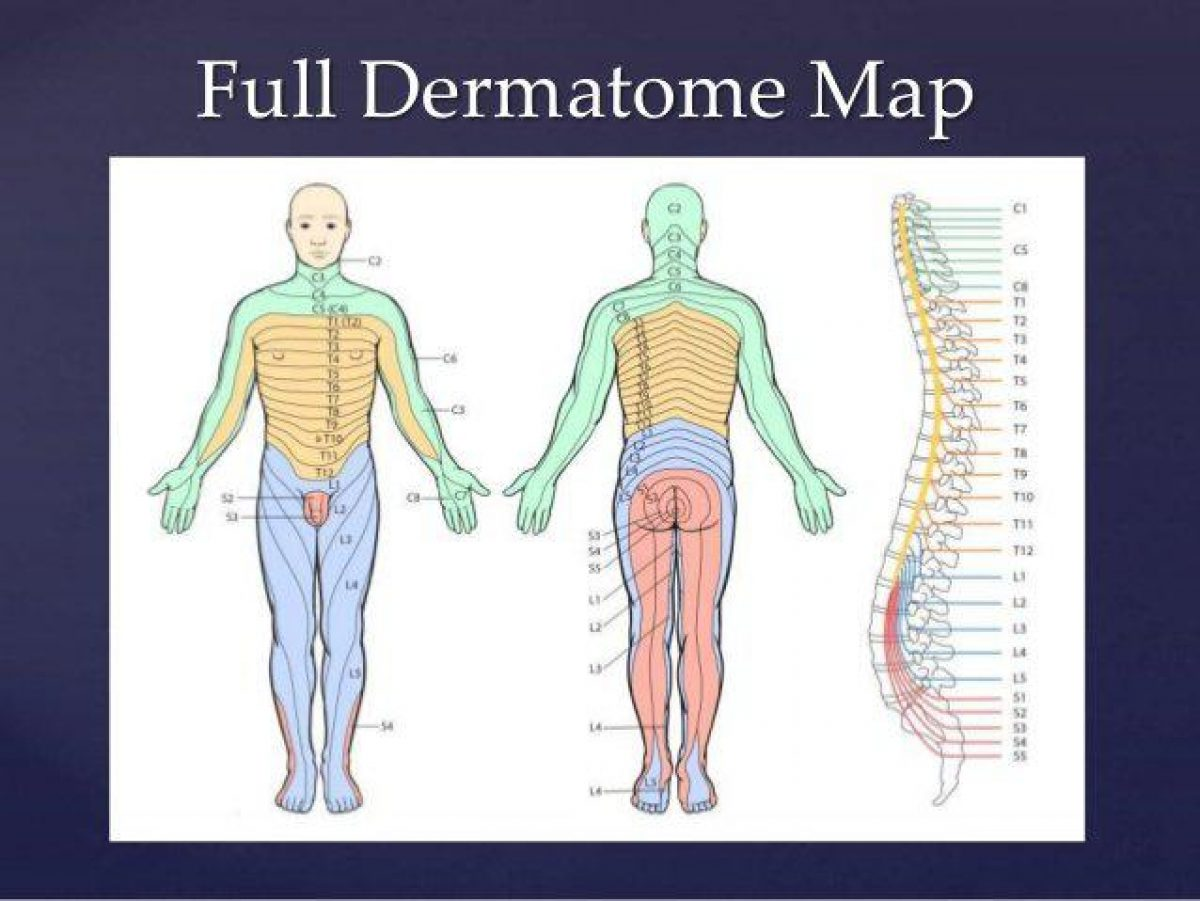 Special test for dermatomes and myotomes 10 638